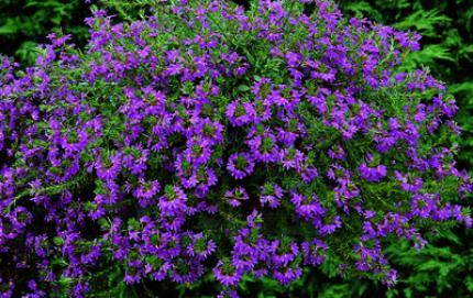 Plante vivace retombante serre de jardin avec plante for Plante grasse arbuste